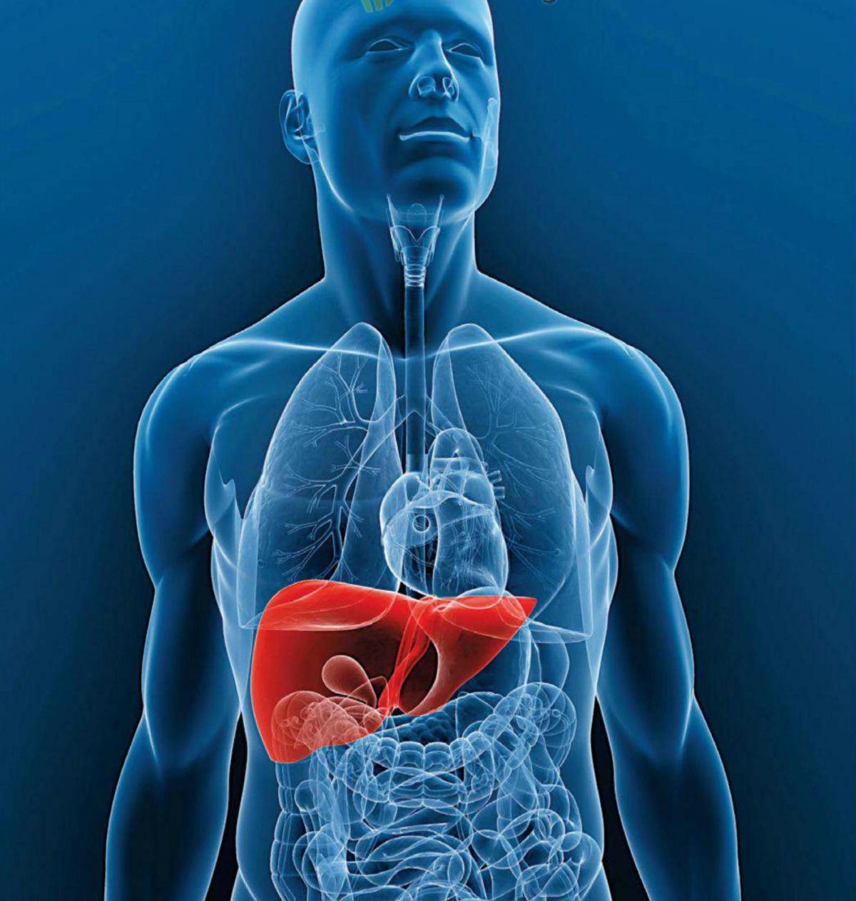 Tu Hígado, la mayor fábrica de Colesterol queexiste