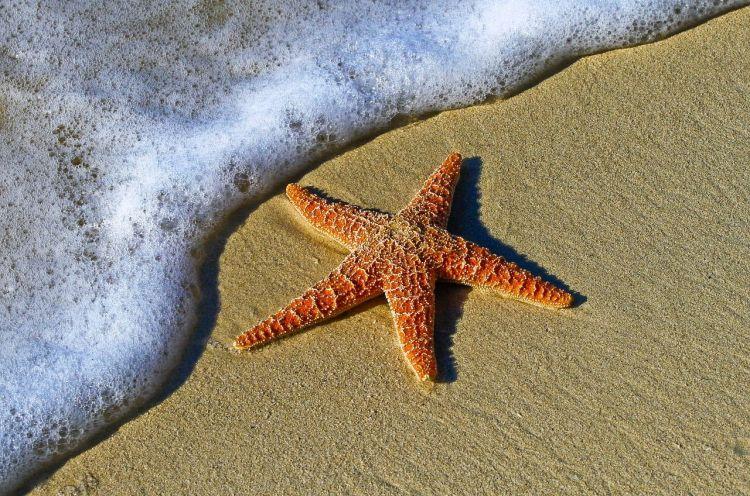 estrella-de-mar33