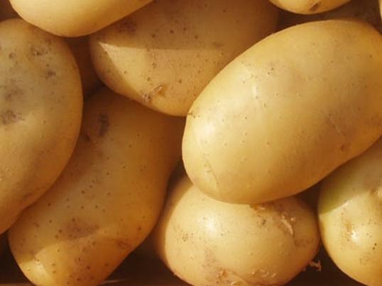 potato-white