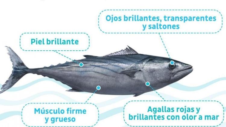 pescado-fresco-3